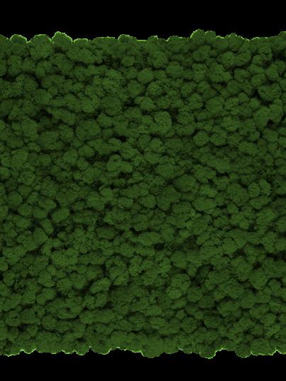 chrobotek-finski-ciemny-zielony-dark-green_800x800-przezroczysty
