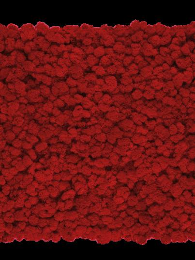 chrobotek-finski-czerwony-red_800x800-przezroczysty